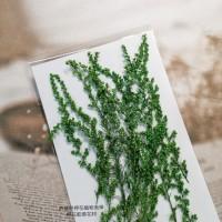 茵陳蒿花-染綠色-押花花材