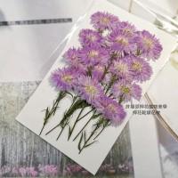 孔雀草花-側面紫色