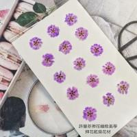 滿天星-紫紅色正面-押花花材