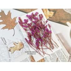 水晶花-桃紅-押花花材