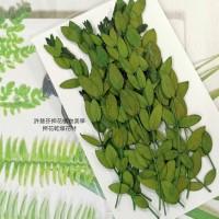 尤加利葉-綠色-押花花材
