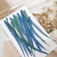 山茂尖-海藍色-押花花材