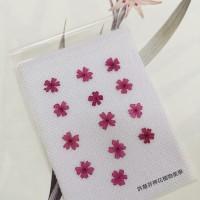 美女櫻-桃紅色-押花花材