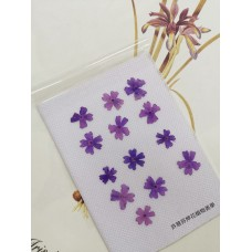 美女櫻-紫色-押花花材