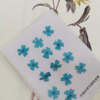 美女櫻-天藍色-押花花材