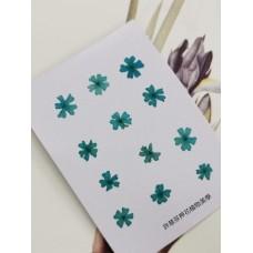 美女櫻-深天藍色-押花花材
