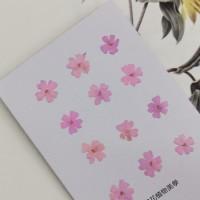 美女櫻-粉紅-押花花材