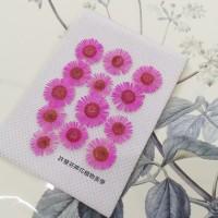 白針菊-粉紅色-押花花材