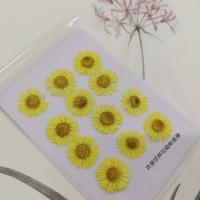 白針菊-黃色