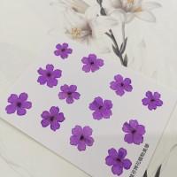美女櫻-淡紫色-押花花材