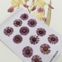 白針菊-暗紫色-押花花材