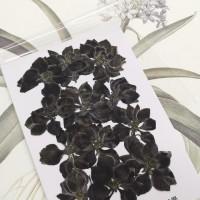 千鳥-黑色-押花花材