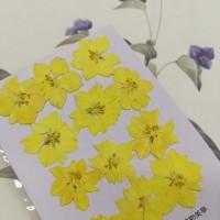 千鳥-黃色