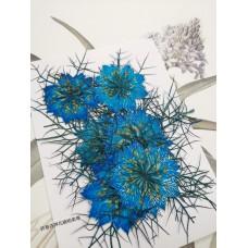 黑種草-湖藍色-押花花材