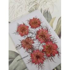黑種草-淡紅色-押花花材