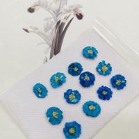 法國小白菊-湖藍色正面-押花花材
