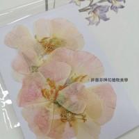 古代稀-原色粉-押花花材