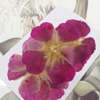 古代稀-原色桃紅-押花花材