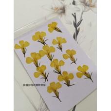 六倍利-原色黃-押花花材