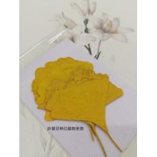銀杏葉-染黃色-押花葉材