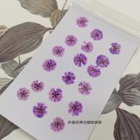 滿天星-紫色正面-押花花材