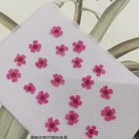 小手球-粉紅色正面-押花花材