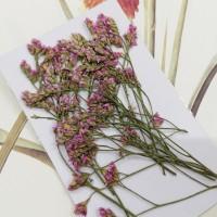 水晶花-原色粉-押花花材
