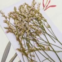 水晶花-原色白粉-押花花材
