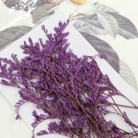 卡斯比亞-紫紅色-押花花材