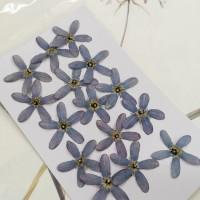 藍星花-藍色-押花花材