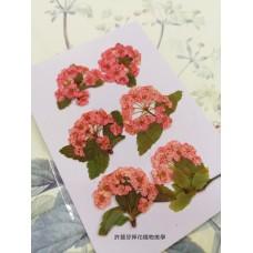 小手球串-粉紅色-押花花材