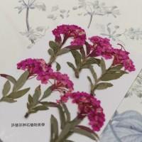 小手球串-桃紅色-押花花材