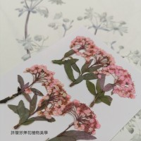 小手球串-淡粉紅色-押花花材