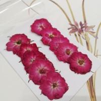 玫瑰花-原色紅-押花花材