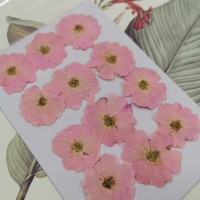玫瑰花-淡粉紅-押花花材
