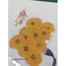 玫瑰花-黃色-押花花材