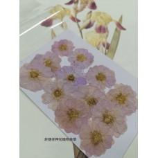 玫瑰花-紫色-押花花材