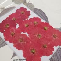 玫瑰花-紅-押花花材