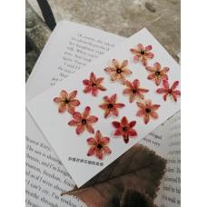 伯利恆之星-淡紅色-押花花材
