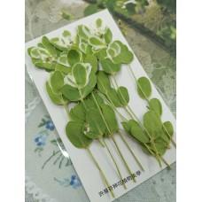 初雪草-綠白色-押花花材