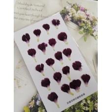 康乃馨花瓣-酒紅色-押花花材