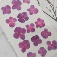 繡球花-粉紅紫色-押花花材