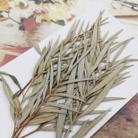 銀樺葉-原色-押花花材
