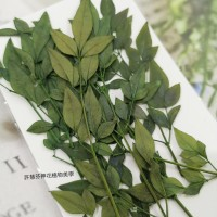 南天竹-綠色-押花花材