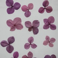 網繡球花-508色-押花花材