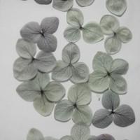 網繡球花-509色-押花花材