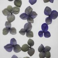 網繡球花-511色-押花花材
