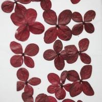 網繡球花-512色-押花花材
