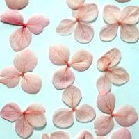 網繡球花-522色-押花花材