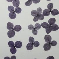 網繡球花-523色-押花花材